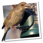 Bird Lovers™