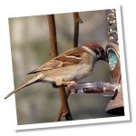 Vogelfuttersysteme